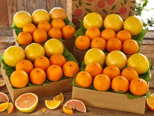 Orange & Grapefruit